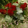 buketter__arrangemang_20130227_1925719183.jpg