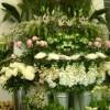 butiken_20110805_1893909345.jpg