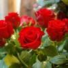 skicka_blommor_20130208_1667371103.jpg