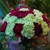 buketter__arrangemang_20120112_1308735624.jpg