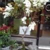 butiken_20140319_1899924701.jpg