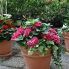 foeretagsblommor_20110805_1297444556.jpg