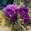 skicka_blommor_20181223_1086191296.jpg